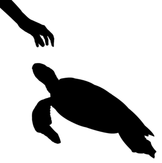 The turtle from Uraschimataro and the Turtle